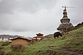 Miwo Gompa, and Buddhist temple, and the World Peace Stupa under construction. A tall crane. Yak grazing. Grassland on hillside., Sichuan in Tibet