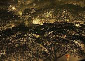Blick von oben auf Bäume im Salcedo Park bei Regen, Makati City, Manila, Philippinen, Asien