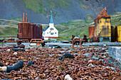 Ehemalige Walfangstation Grytviken mit Kirche, Südgeorgien, Südliche Sandwichinseln, Britisches Überseegebiet, Südatlantik, Antarktis