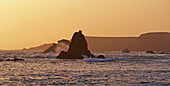 Pacific coast at Albion at sunset, Mouth of Albion River, Pacific Ocean, Mendocino, California, USA, America