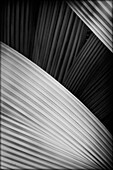 Abstract Palm Frond Detail