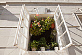 Open window with potted plants, old town of Prague, Czech Republic