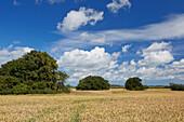 Megelithic graves Woorker Berge in a cornfield, Island of Ruegen, Mecklenburg Western Pomerania, Germany, Europe