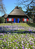 Flower meadow in front of captain's house at Born, Fischland Darss Zingst, Mecklenburg Western Pomerania, Germany, Europe