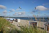 Beach chairs and seagulls on the beach, Seaside resort Boltenhagen, Mecklenburg Western Pomerania, Germany, Europe