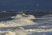 Stormy Baltic Sea and seagulls, Mecklenburg Western Pomerania, Germany, Europe