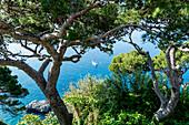 View onto the sea with boat through the trees, Capri, Campania, Italy