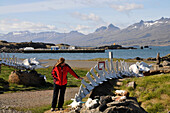 Skeletons near harbour, Djupivogur, fjord Berufjoerdur, Austurland, Iceland