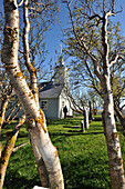 Birch trees in front of the church of Skutustadir at lake Myvatn, North Iceland, Europe