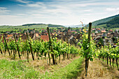Panoramic view over vineyards, Riquewihr, Alsace, France
