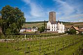 Carl Jung winery and gondola lift above vineyards, Rudesheim am Rhein, Hesse, Germany, Europe