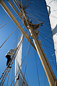 Man climbing up the mast of sailing cruise ship Star Flyer, Baltic Sea, Sweden, Europe