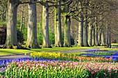 Tree lined path in formal garden with Springtime flowerbeds, Keukenhof Gardens, Lisse, Holland, Netherland