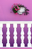 Pink wall with white balustrade and flower pott, Bo-Kaap Malay Muslim District, Cape Town, South Africa