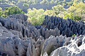 Tsingy de Bemaraha Strict Nature Reserve is a nature reserve located near the western coast of Madagascar in Melaky Region  The area was listed as a UNESCO World Heritage Site in 1990 due to the unique geography, preserved mangrove forests, and wild bird.
