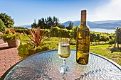 A bottle and a glass of white wine at a vineyard in the Okanagan Valley, British Columbia, Canada