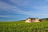 Vineyards and estate of Clos de Vougeot, Burgundy, France, Europe
