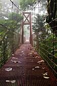 Suspended Bridge in the Monteverde Cloud Forest Reserve, Costa Rica