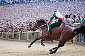 contrada of the goose, the race, palio of siena, siena, tuscany, italy, europe