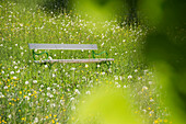 Bench standing in a spring meadow, Black Forest, Baden-Wuerttemberg, Germany, Europe