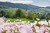 Blumenwiese und der Kirchturm im Ortsteil Laufen bei Sulzburg, Marktgräflerland, Schwarzwald, Baden-Württemberg, Deutschland, Europa