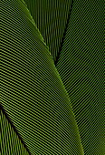 Close-up of parrot feathers, detail, bird, Animal