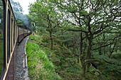 Forest in Snowdonia National Park seen from Ffestiniog Narrow Gauge Heritage Railway, near Coed-y-Bleiddiau, Gwynedd, Wales, United Kingdom
