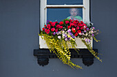 Young boy looks out window of Ship &amp, Crown Pub, St Peter Port, Channel Islands, England, British Crown Dependencies