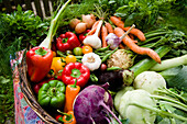 Fresh vegetables in a basket, harvest, Garden