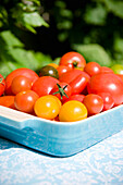 Fresh tomatoes in a bowl, garden, Bavaria, Germany