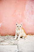 Small kitten in the old town, cat, Sicily, Italy