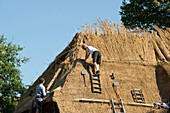 Roofers working on a house with thatched roof, Nieblum, Foehr, North Frisian Islands, Schleswig-Holstein, Germany, Europe