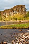 Dusk at Applecross Forest in North West Highlands, Highland, Scotland