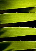close-up of four tropical leaves vertically aligned with light creating shadows and illuminating the veins