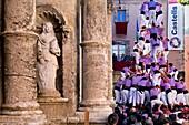 Colla Jove Xiquets de Tarragona ´Castellers´ building human tower, a Catalan tradition Fira de Santa Teresa, town festival  Plaça Vella El Vendrell Tarragona province, Spain