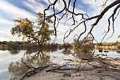 Landscape in the Hattah -Kulkyne Park in the Mallee Region of Australia  The Hattah lake system is listed as a RAMSAR site of international importance  Connected by channels with the Murray River it is flooded by the river during extreme river floods  Lar