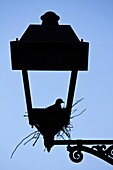 Pigeon nest on a lamppost - Tarragona - Catalonia - Spain - Europe