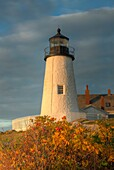 Pemaquid Point Lighthouse in warm light just after sunrise, Bristol, Maine, USA