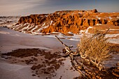 Flaming cliffs, Bayan zag rich in saxaul trees with small saxaul tree, made famous by American Roy Chapman Andrews expeditions in 1920s that discovered dinosaur fossils and eggs, Gobi desert winter landscape, Mongolia