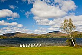 White chairs on shore of Blue Mountain Lake in the Adirondack Mountains of New York