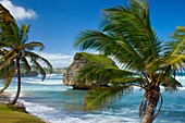 Bathsheba Rock on the east coast of Barbados, West Indies