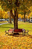 Park bench in autumn, Woodstock, Vermont, USA