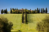 Tree-lined drive to country villa near San Qurico d´Orcia, Tuscany Italy