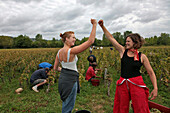 The Grape-Pickers Who Were The First To Finish Their Row, Traditional Party On The Last Day Of The Hand Picking Of The Grapes, Burgundy White, Huber-Verdereau Vineyards, Volnay, Cote-D'Or (21), Burgundy, France