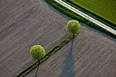 (photo aérienne),/France, Pyrenees-Orientales (66), landscape, agricultural, graphics, fields and trees, /, (aerial photo)