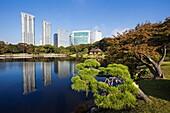 Japan,Tokyo,Hama Rikyu Japanese Garden and Shiodome Area Skyline