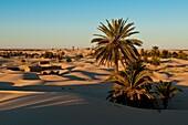 North Africa, Tunisia, Kebili province, the village of Zaafrane stuck in the sand