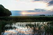Teich mit Schilf bei Sonnenaufgang, Insel Langeland, Dänemark, Europa
