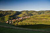 Hills and vineyards at Schelingen, Kaiserstuhl, Baden-Wuerttemberg, Germany, Europe