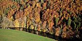 Danube river at autumn, upper Donautal around Beuron, Landkreis Sigmaringen, Swabian Alb, Baden-Wuerttemberg, Germany
